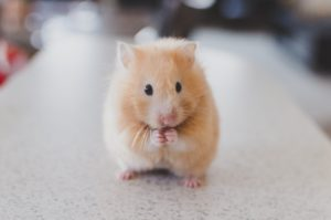 medication for hamster
